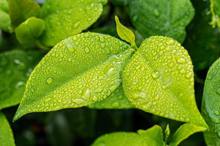 5 dôvodov, prečo používať ekodrogériu