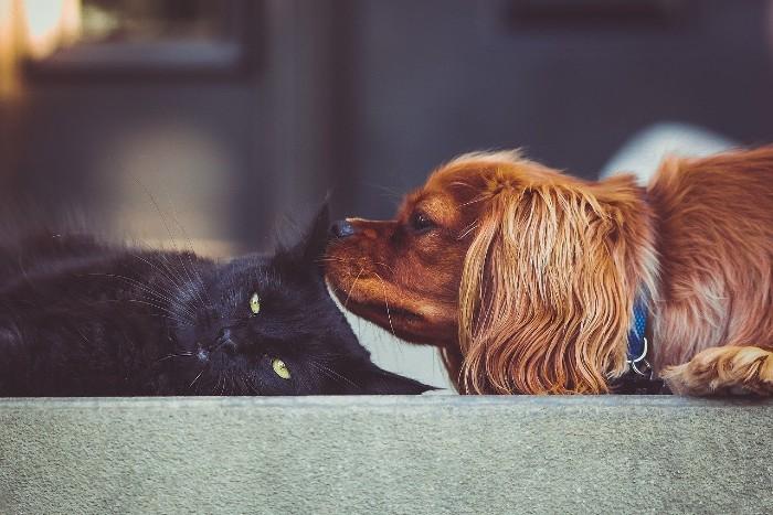 Ako na odčervenie psov a mačiek