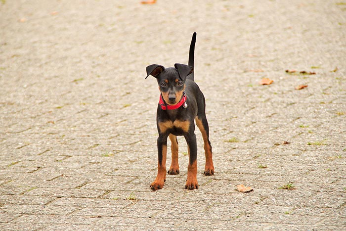 Megy - spokojný pes
