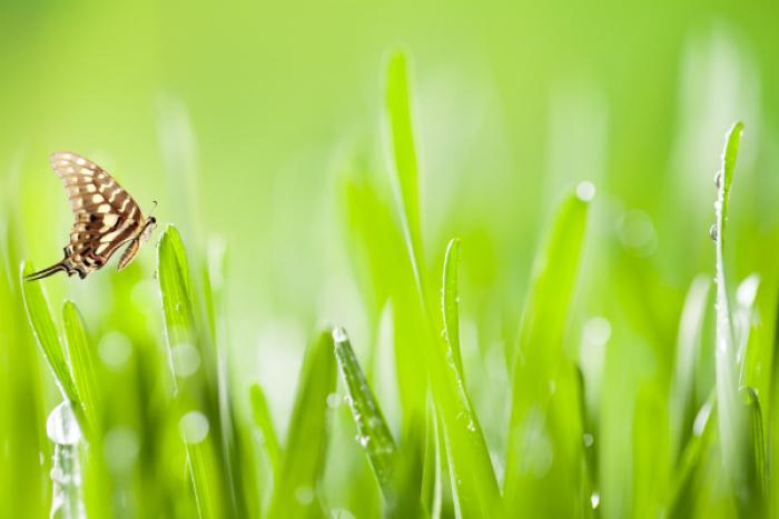 Zelený jačmeň - načerpajte jeho energiu!